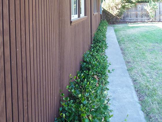 back-yard-bush