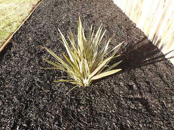 spiky-plant