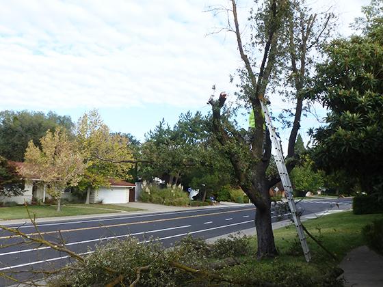 tree-work-begins