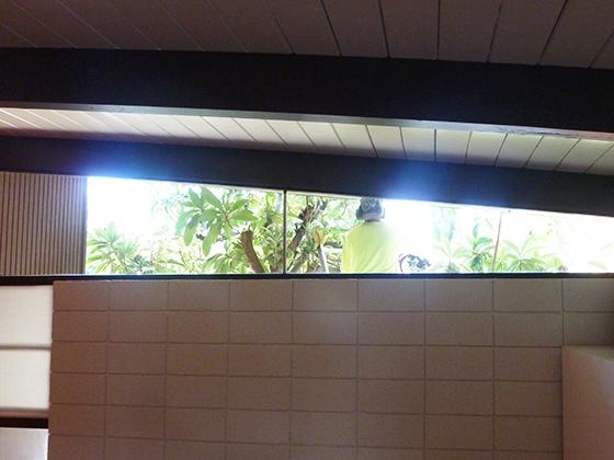 window-tree-view