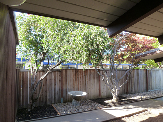 courtyard-tree-cover