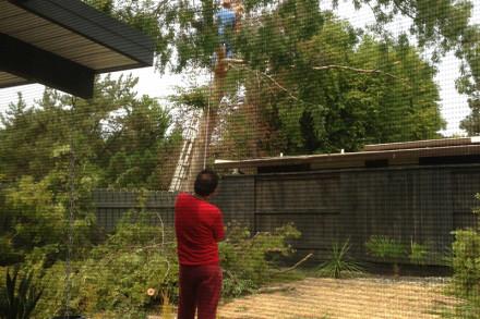 big-tree-removal