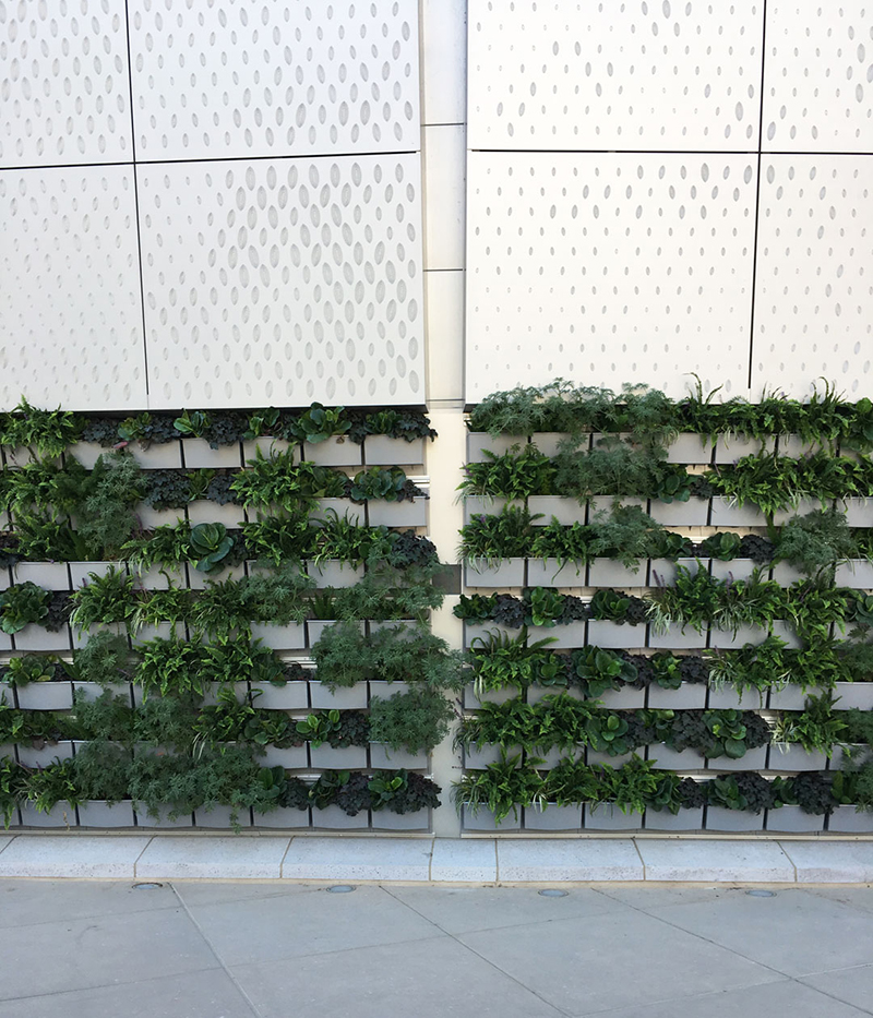 kings-arena-living-wall